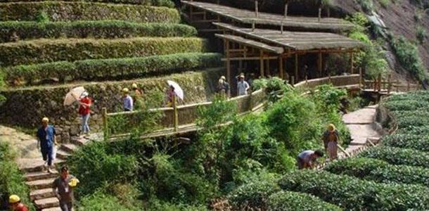 武夷山大红袍景区有武夷山最大的寺庙天心永乐禅寺,有被传为神茶的大红袍。大红袍景区主要景点有:牛栏坑、永乐禅寺、大红袍、三花峰、磊石岩、马头岩、悟源洞、杜辖岩。 大红袍是神奇的茶树,它有与众不同的生长环境。大红袍是武夷岩茶中的状元,它生长在武夷山北部的九龙窠中,大红袍的树龄已逾千年,现在九龙窠绝壁上仅剩四株,岩缝中渗出的泉水滋养着它们,因而不用施肥它们也生长茂盛。大红袍茶产量极少被视为稀世珍宝。大红袍是武夷山最负盛名的茶树,被誉为茶中之王生长在九龙窠内的一座陡峭的岩壁上。茶树所处的峭壁上,有一条狭长的岩